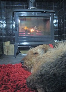 Airedale Terrier sleeping in front of a woodburning stove