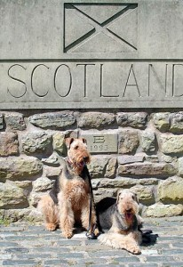 2 Airedale Terriers at the Scottish Border with England